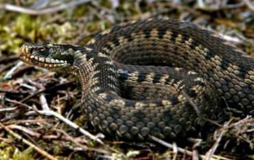В Карпатах змея укусила молодую девушку