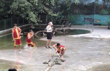 Жесть: Китаец во время шоу свалился в бассейн с крокодилами (ВИДЕО)