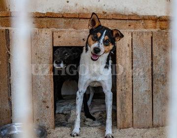 Дом для четвероногих: закарпатец устроил приют для собак у себя во дворе (ВИДЕО)